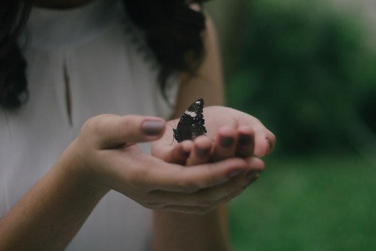 Triste papillon