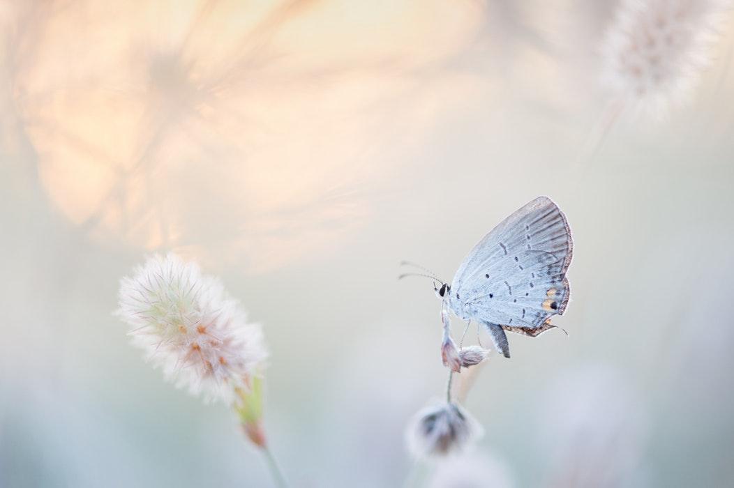Mon papillon a fini par voler